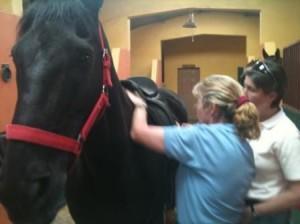 Lisa-saddle-Petra