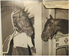 Secretariat (on the left)and Sham saying hello to one another.